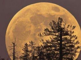 """""""超级蓝色血月""""的夜晚,听那些与月亮有关的钢琴曲"""