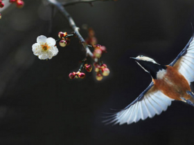 《夜莺和布谷鸟》《车尔尼第55条》——第142课